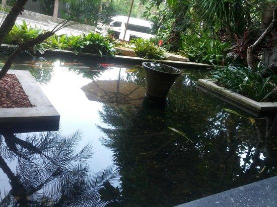 Wyndham Sea Pearl Resort Phuket: carp pond, one of many