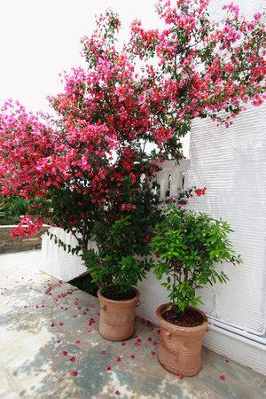 Nicolas Hotel Apartments: Garden