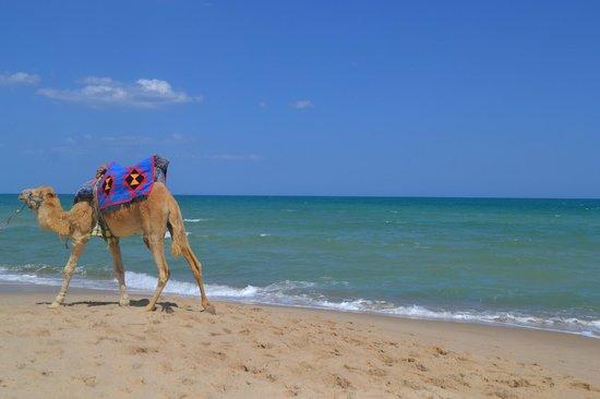 Hotel Safa : пляж