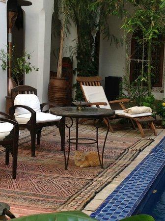 Riad Les Yeux Bleus: The riad cat!