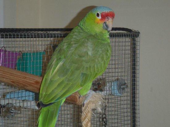 Serenity Sands B&B: The Resident Parrot