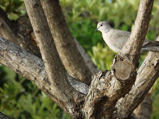 Doves at Dove Creek Lodge.