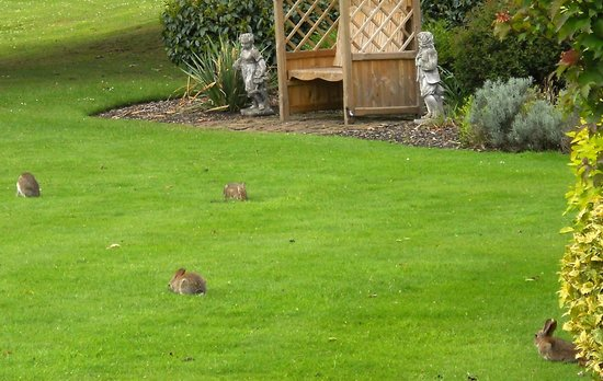 Rookery Hall Hotel & Spa: baby rabbits on the lawn
