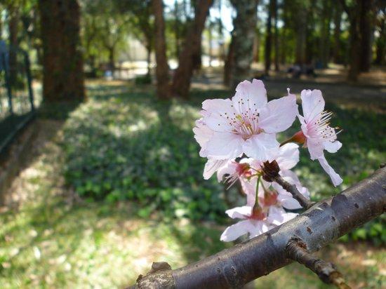 Парк Ибирапуэры: Visitar na primavera é sempre uma excelente opção