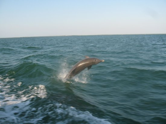 Blue Fin Charters Our Friends The Dolphins At Boat Visiting