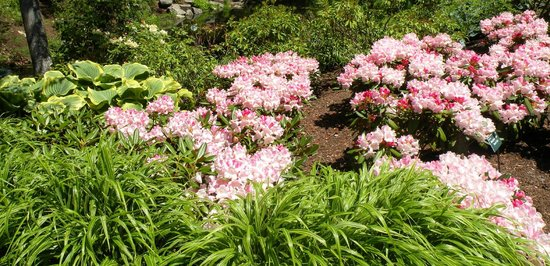 Coastal Maine Botanical Gardens: Serene walking trails in a natural setting peaceful environment