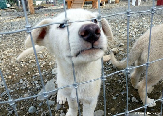 Husky Homestead Denali National Park And Preserve All You Need - Husky homestead
