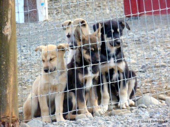 Husky Homestead Denali National Park And Preserve Top Tips - Husky homestead