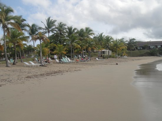 The Buccaneer St Croix : playa hotel