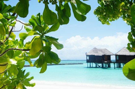 view picture of sheraton maldives moon