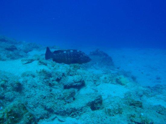 Pelagos Dive Centre: haida again