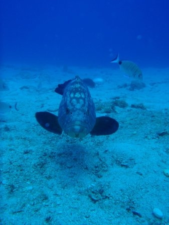 Pelagos Dive Centre: haida