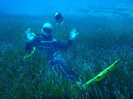 Pelagos Dive Centre: manu