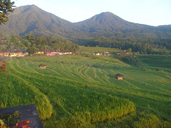 Natural Cycling: Jatiluwih Village