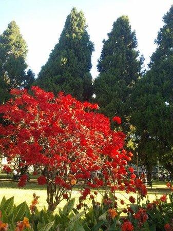 Holiday Inn Harare : Jardim