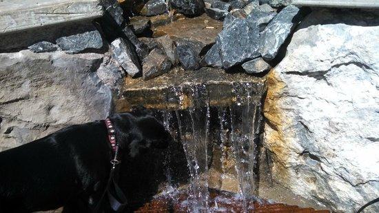 توين بيكس لودج آند هوت سبرينجز: Aspen drinking from the fountain