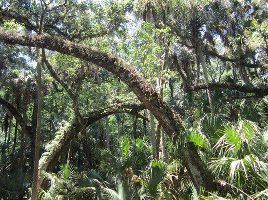 Sebring (FL) United States  city photos gallery : ... first gator incounter Photo de Highlands Hammock State Park, Sebring