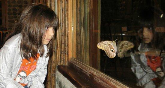 Terrabambu Restaurant Lodge: Mariposas, pajaros...mucha fauna y flora