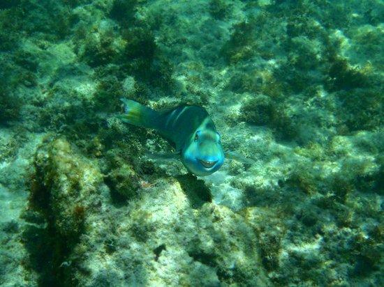 Catalonia Riviera Maya: Reef off the Hotel's beach.