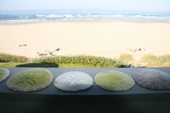 Stephanie Inn: Seashells picked from the Beach