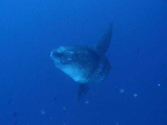 Bali Diving Tour - Bali Mango Dive