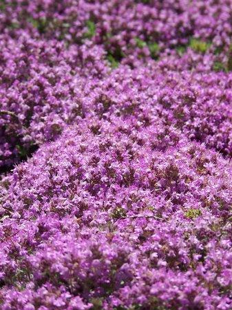Coastal Maine Botanical Gardens: pretty colors