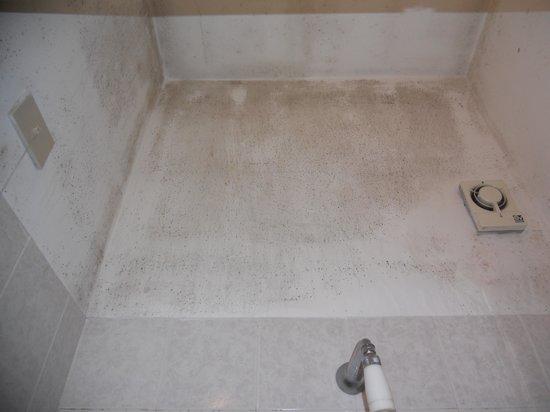 Hotel Tonic: bathroom mold