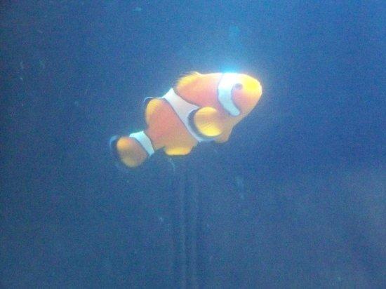 Maine State Aquarium: finding Nemo