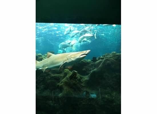 Owl Picture Of The Florida Aquarium Tampa Tripadvisor