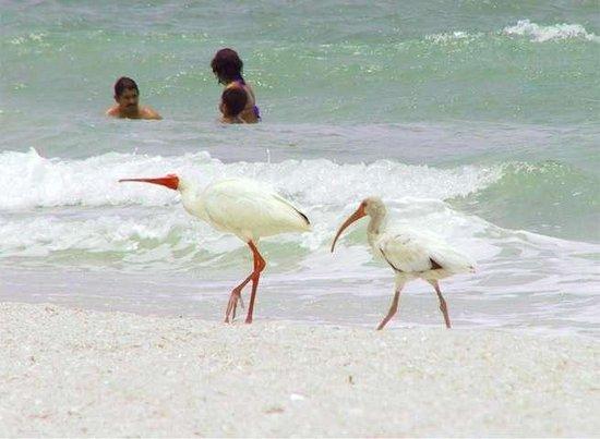 Tropical Beach Resorts: Lots of wildlife! Crabs running around too!