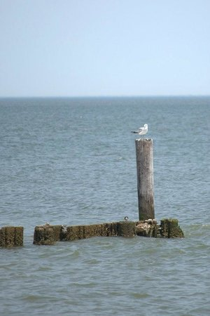 Buckroe Beach and Park : Sitting on the dock of the bay