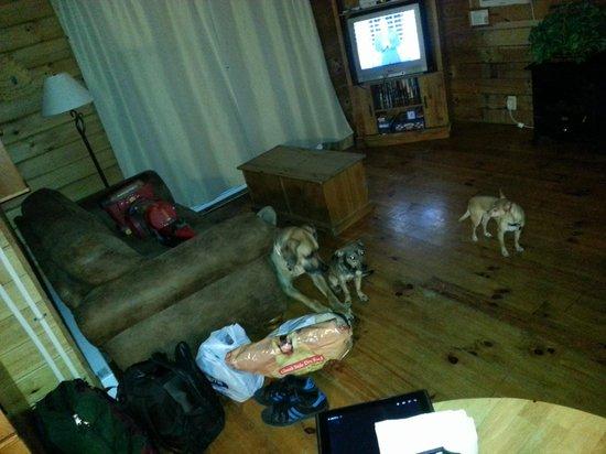Getaway Cabins: dogs relaxing