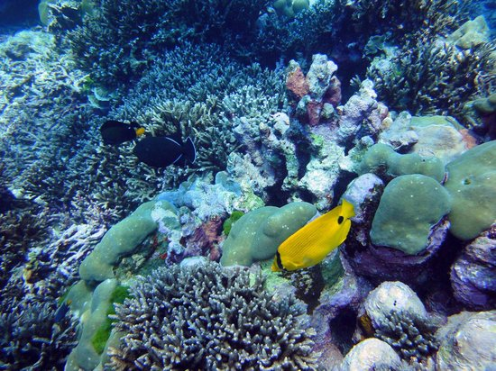 Infinity Ocean Diving - Private Diving: Faune & Flore