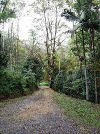 Eden Health Retreat: Bush walk