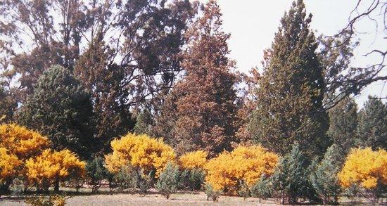Species-rich Native box-pine woodland