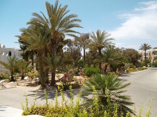 Hotel Meninx: Jardin extérieur