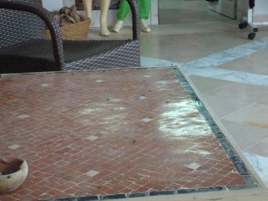 Hotel Meninx: La foire aux mouches !