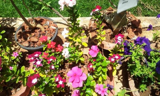 Tarpa (Save Farms): Flower Beds