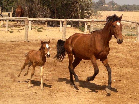 La jument avec son poulain a Ranch de Diabat