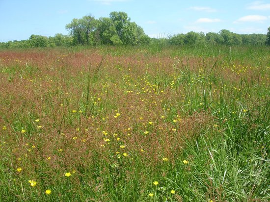 National Colonial Farm: A beautiful meadow at the park.