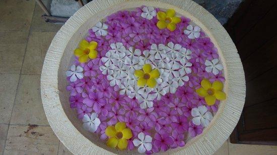Colibri Guest House: Fleurs