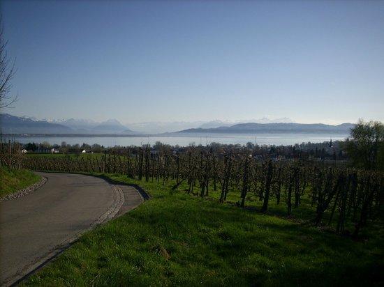 Gästehaus über dem See: Aussicht auf den Bodensee und die Alpen bei der Anfahrt zum Gästehaus
