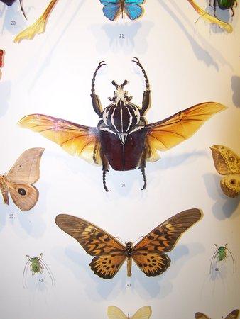 Insectarium de Montréal : De toute beauté!