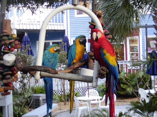 South Beach Inn: Parrots in Courtyard