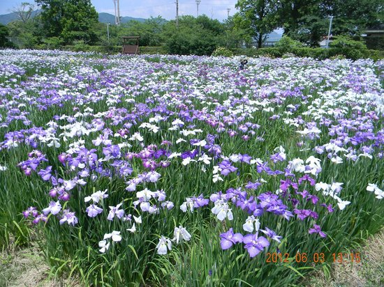 Yamato Chuo Park Hanashobuen