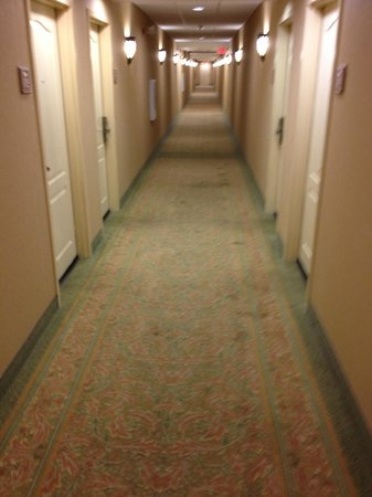 Homewood Suites Ocala at Heath Brook: the entire hall had disgusting stains on it, on all floors