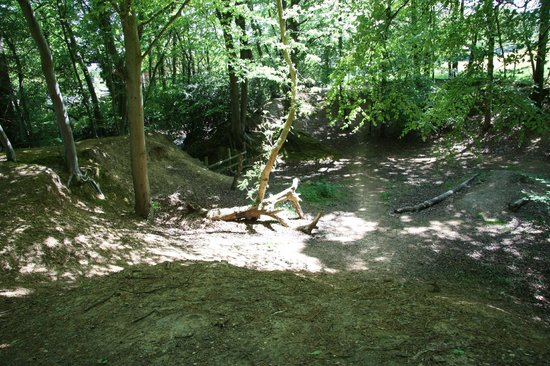 Buckland Rings ditches