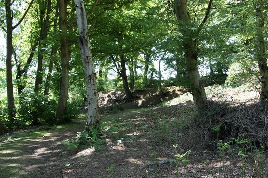 Buckland Rings ramparts
