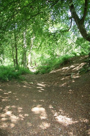 Buckland Rings ditch