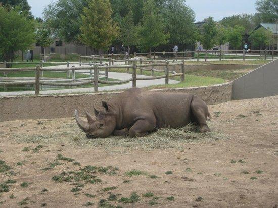 Rhino - Picture of Tanganyika Wildlife Park, Goddard - TripAdvisor